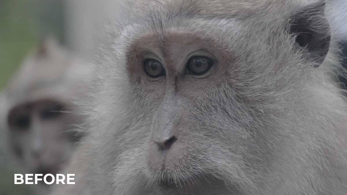 ape - RAW